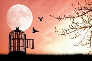 Ovako se duša oseća slobodnom kada oprosti :)