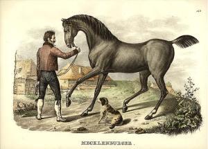 dog-horse