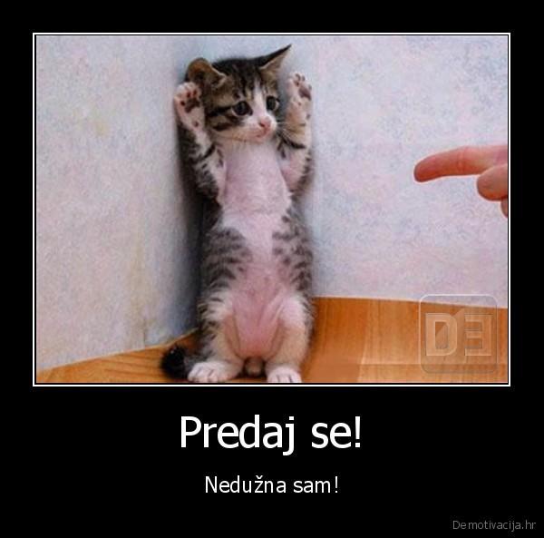 demotivacija.hr_Predaj-se-Neduzna-sam_131172884577